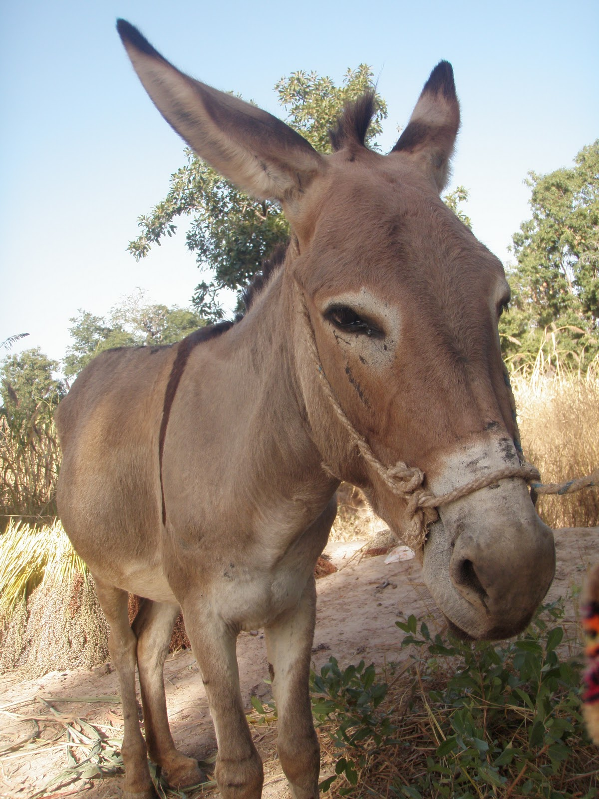 funny donkey faces - photo #6