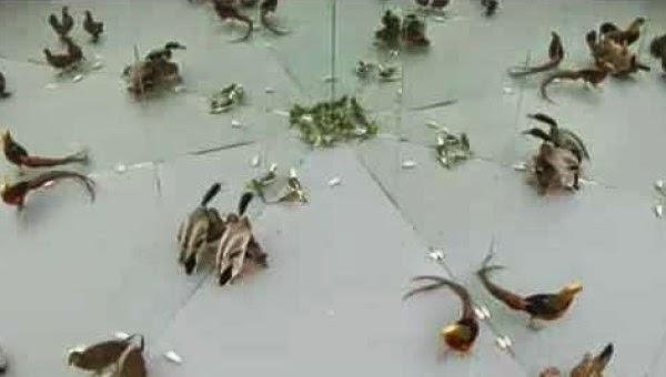 ردة فعل الحيوانات داخل بيت من المرايا