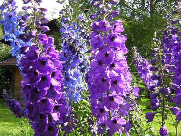 Il giardino sfumato spighe di fiori for Pianta fiorita da esterno