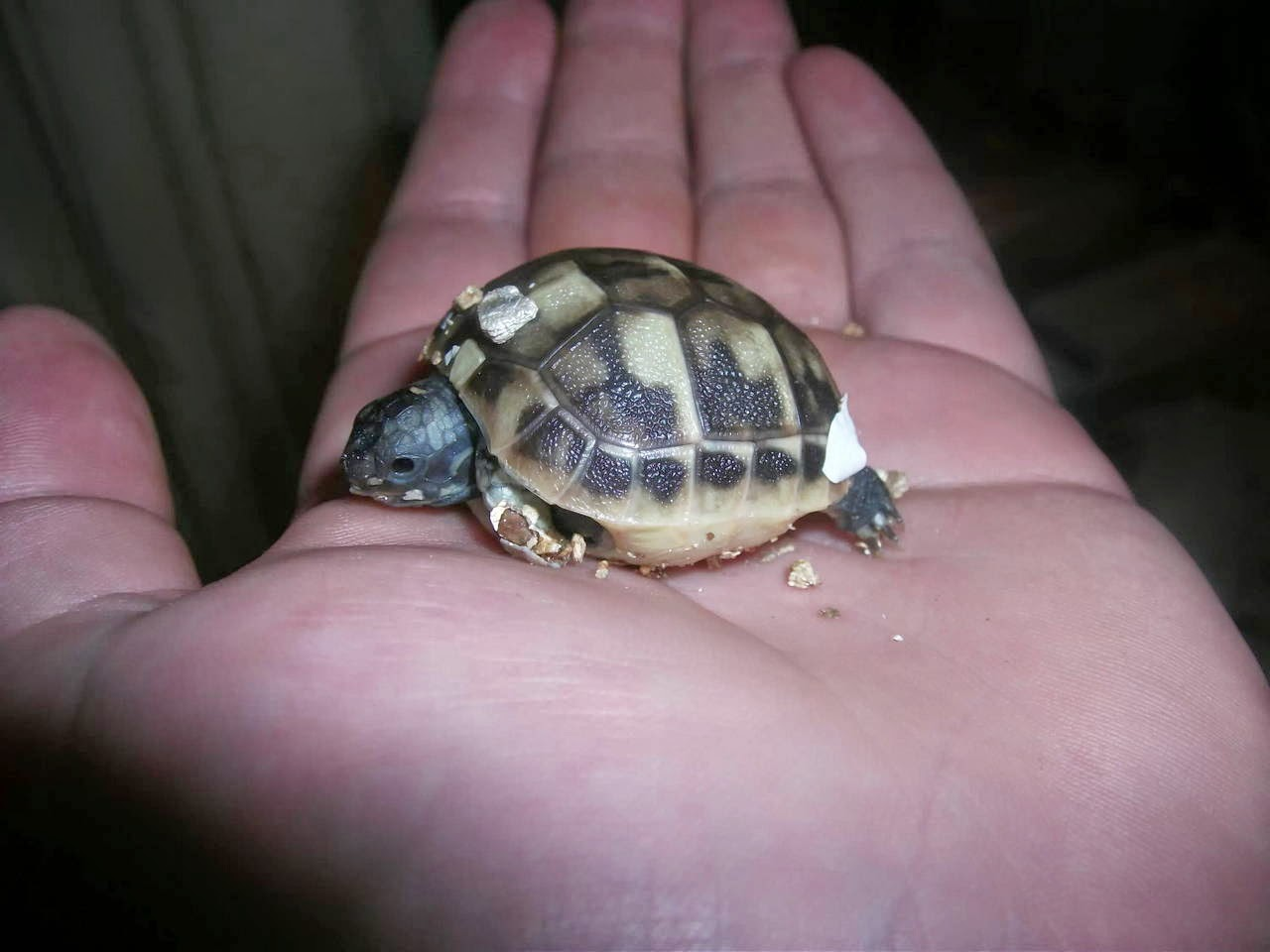 Funny animals of the week - 9 May 2014 (40 pics), cute animals, animal photos, cute little baby turtle