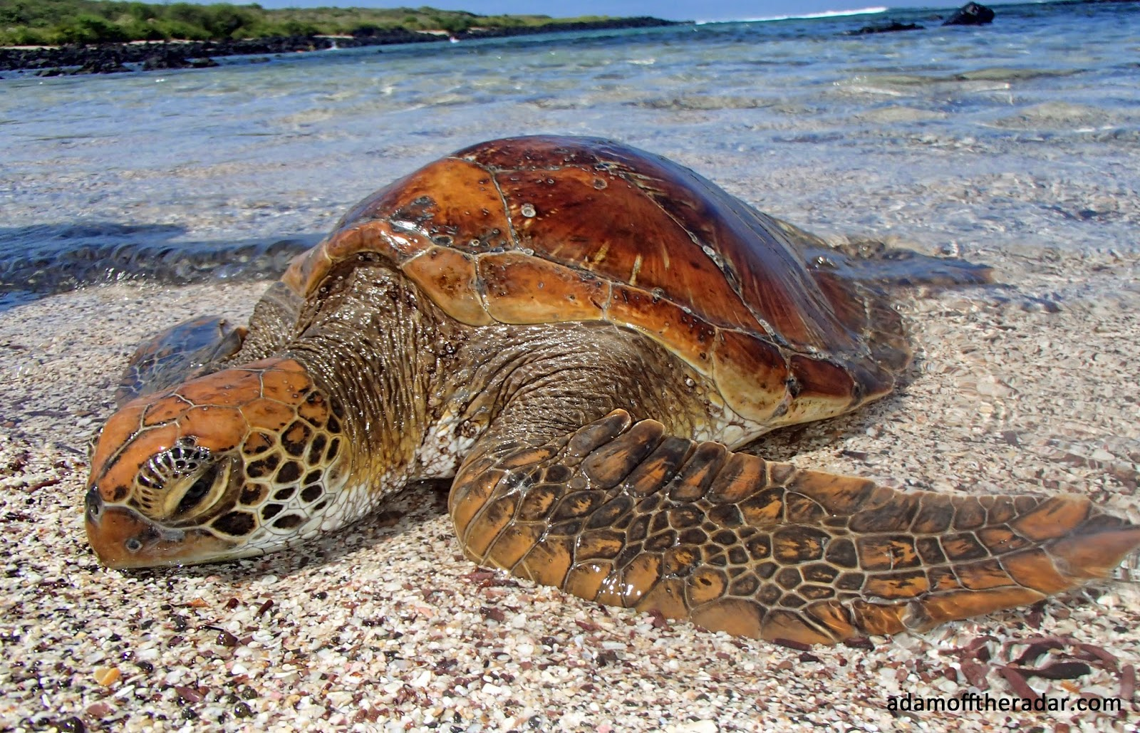 how to do galapagos on a budget