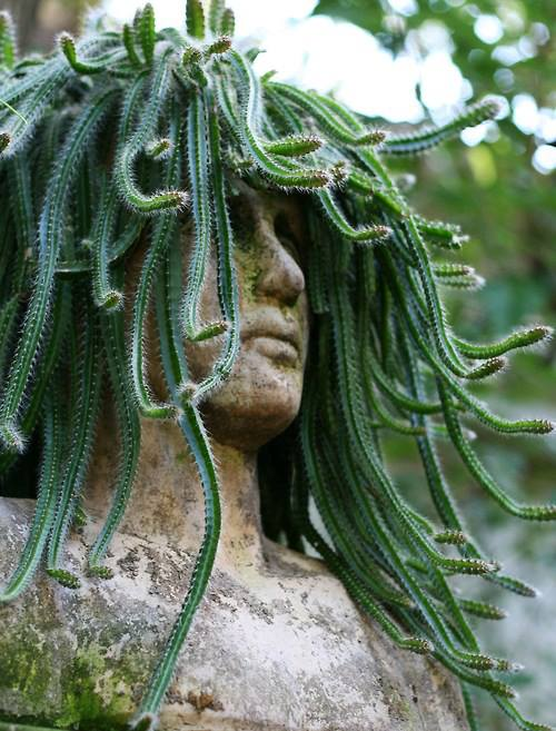 LET MEDUSA SCARE YOU SILLY!