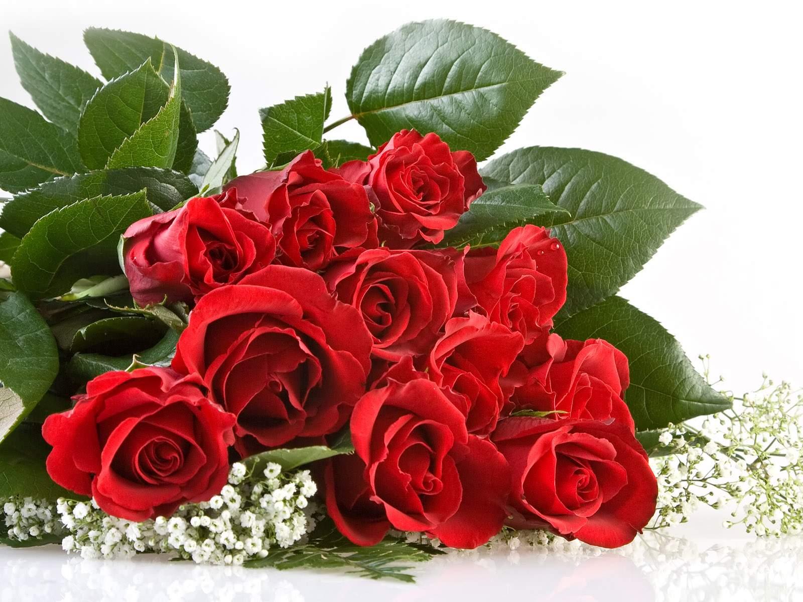 http://1.bp.blogspot.com/-sMDYbzOotQ0/TsX70IlvqyI/AAAAAAAAF74/Lwnp2nVRKIw/s1600/flowers+desktop+wallpapers.+%25282%2529.jpg