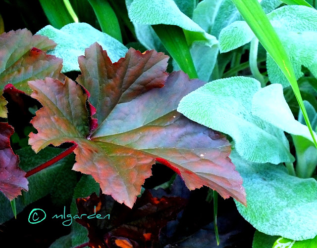 Garden Design Ideas: Heuchera's in Your Garden