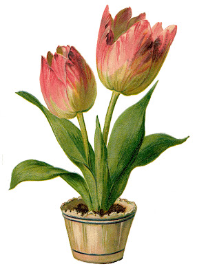 Vintage Clip Art - Pretty Pink Tulips