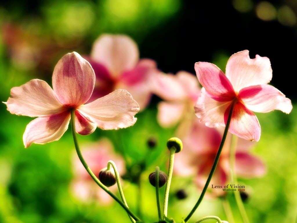 Digital photography wallcoo 5D pink flowers
