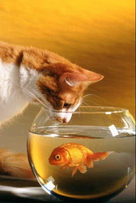 Cat Fish iPhone Apple 4G wallpapers