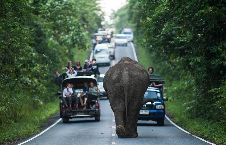 Слон идет на встречу к машинам