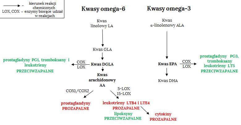 omega-3 | omega-6 | nnkt | niezbędne nienasycone kwasy tłuszczowe | eikozanoidy | prostagladyny | leukotrieny | tłuszcz | zdrowy