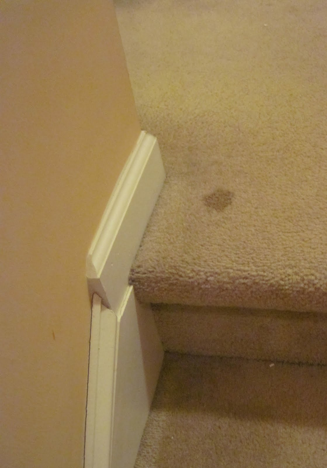 The Everyday Organic All Natural Carpet Cleaning