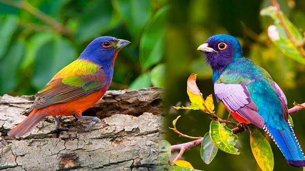Burung Paling Cantik