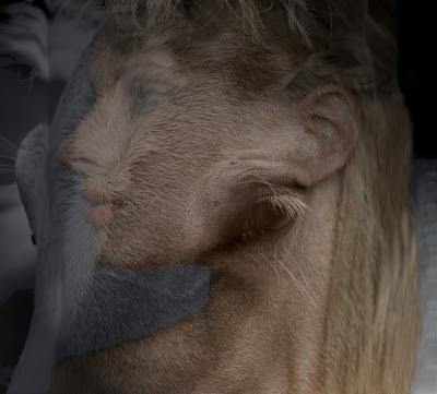 heidi utz photography, horse photography, photomontage, Before Bursting, Heidi Utz, Heidi Utz photography, photomontage, fine art photography, photography blogs, photomontage photos, collage photomontage, photomontage images