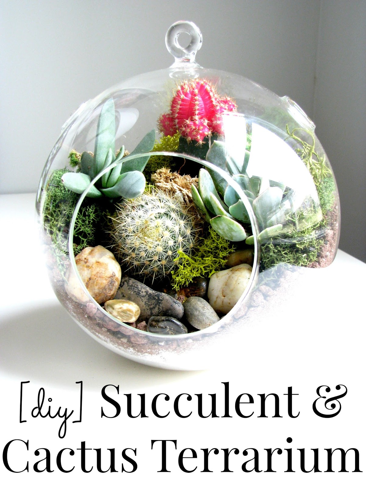 life love larson look for less challenge diy succulent cactus terrarium. Black Bedroom Furniture Sets. Home Design Ideas