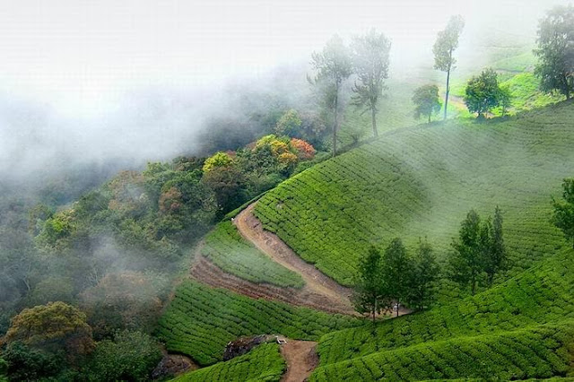 Munnar is a Hill STation in Kerala