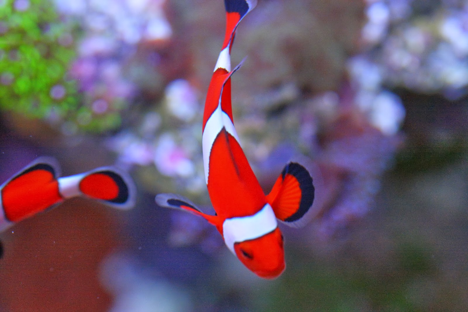 Nano Fish: Small Size, BIG Personalities - Marine Depot Blog