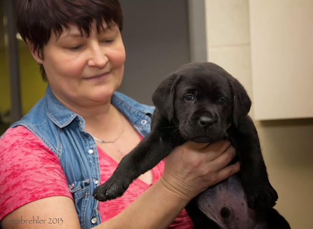 A woman with dark, short hair is holding a small black lab puppy in front of her. She is wearing a pink shirt under a blue vest.