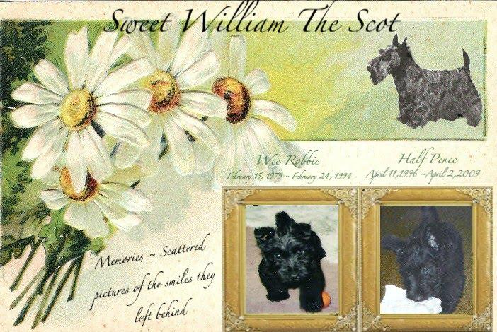 Sweet William The Scot