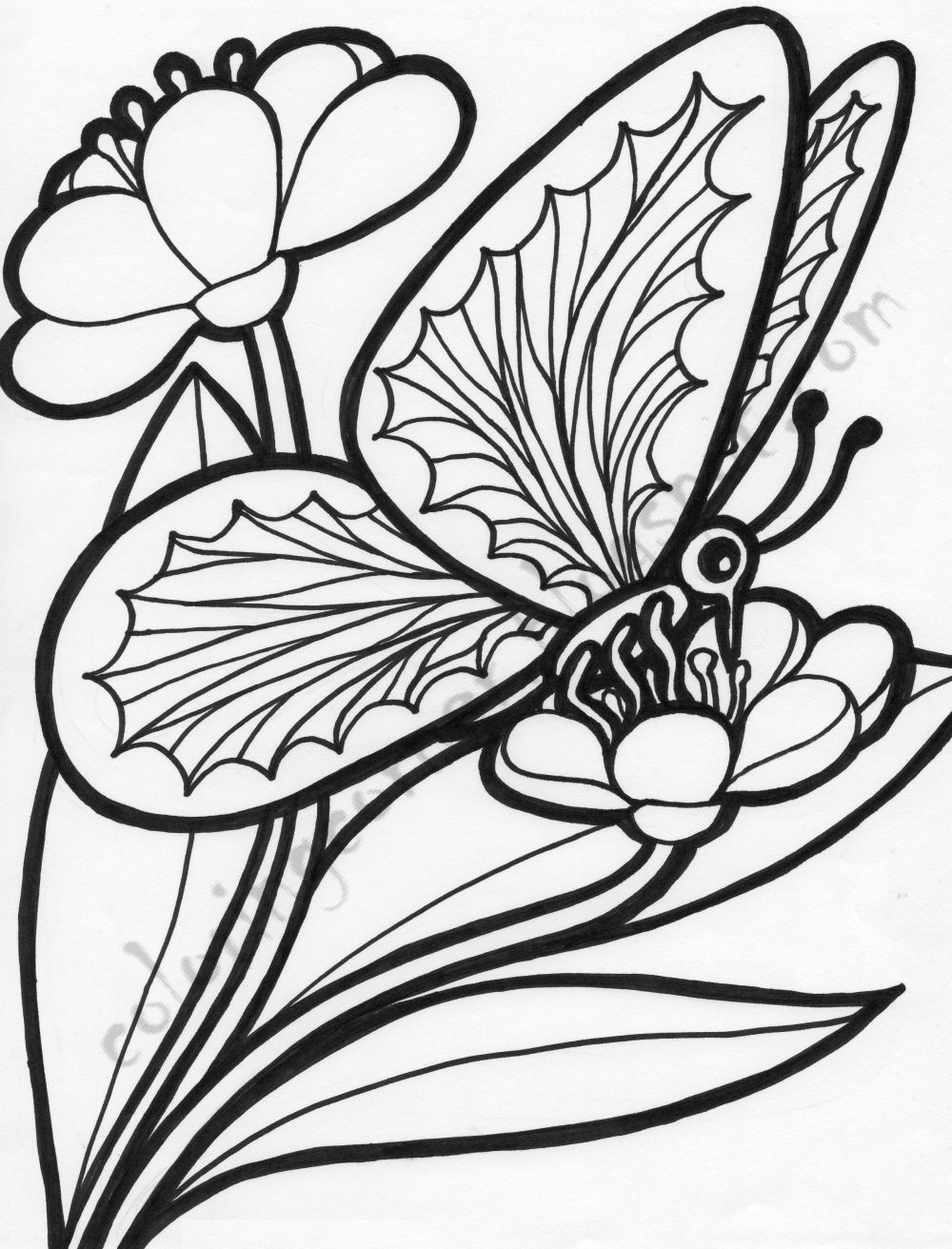 coloring pictures of flowers and butterflies beautiful