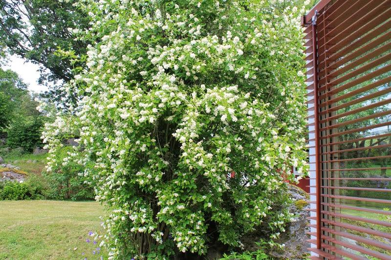 Nel sud del nord la finestra sul giardino giallo giardinicolo estivo - La finestra sul giardino ...
