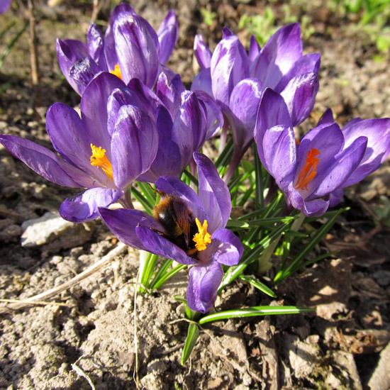 фото, цветы, flowers