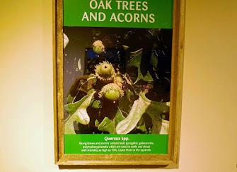 a few poisonous plants