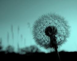 Flores de algodón...