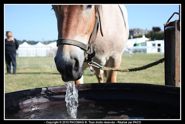 cheval buvant à la Foire Commerciale et Agricole de Sedan