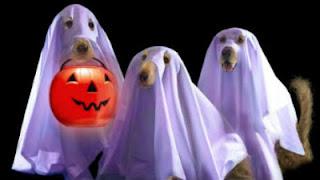 imagem-engracada-halloween-2