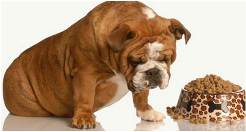 Dinh dưỡng cho thú đúng, chúng sẽ phát triển cân đối và toàn diện.
