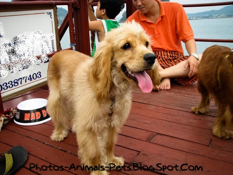 http://1.bp.blogspot.com/-sPzRpkZmiDk/TbWUOkFfE5I/AAAAAAAAAz4/O7323at9Ct4/s1600/Cute%2Bdog_0004.jpg