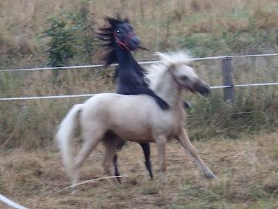 Orawa, Lipnica Wielka, konie, kucyki, zabawy na padoku