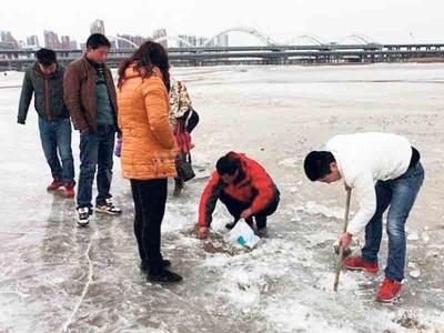 Penduduk tidak melepaskan peluang mengutip ratusan ikan beku dalam sungai ais.