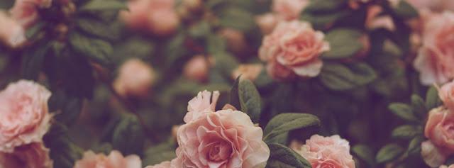 Ảnh bìa fb đẹp và độc hoa