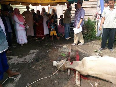 Rayakan Idul Adha 1436H KanKemenag Kota Tanjungbalai Menyembelih Hewan Qurban