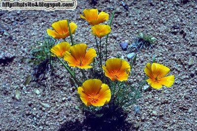 Plants Wallpaper - Plants Hd Wallpaper 2014 - Plants Full Size Wallpaper Free Download