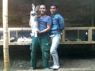 herman rabbit farm banyuwangi