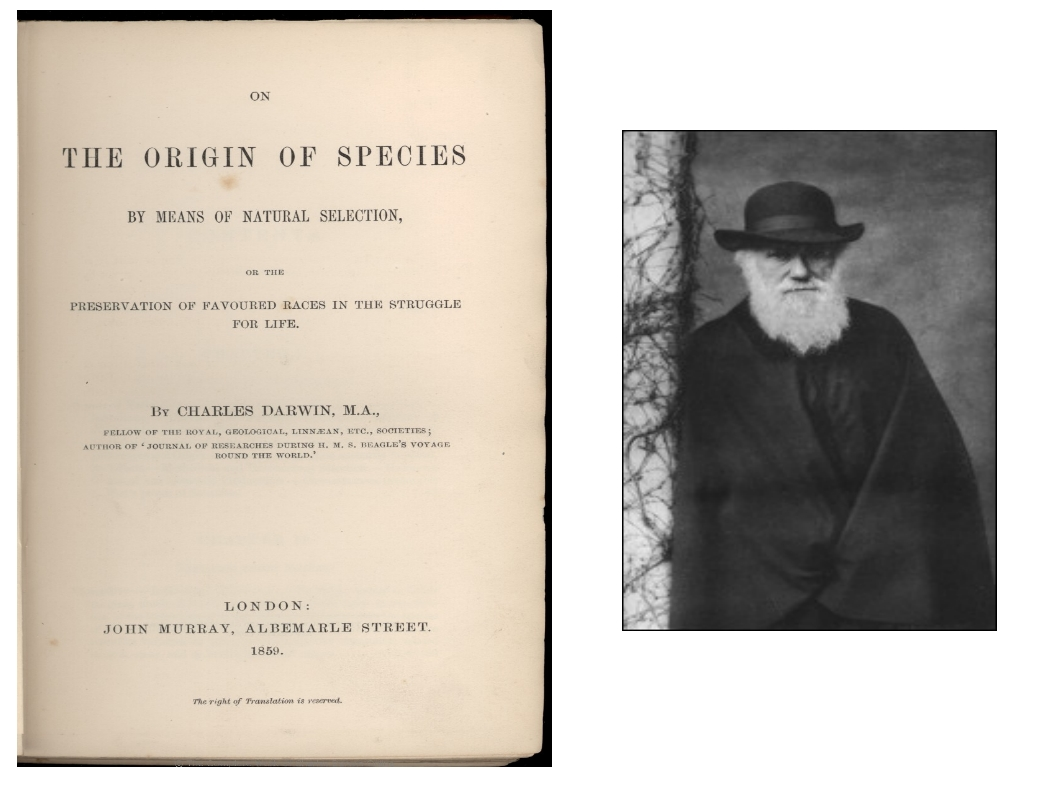 essays on darwin's theory of evolution