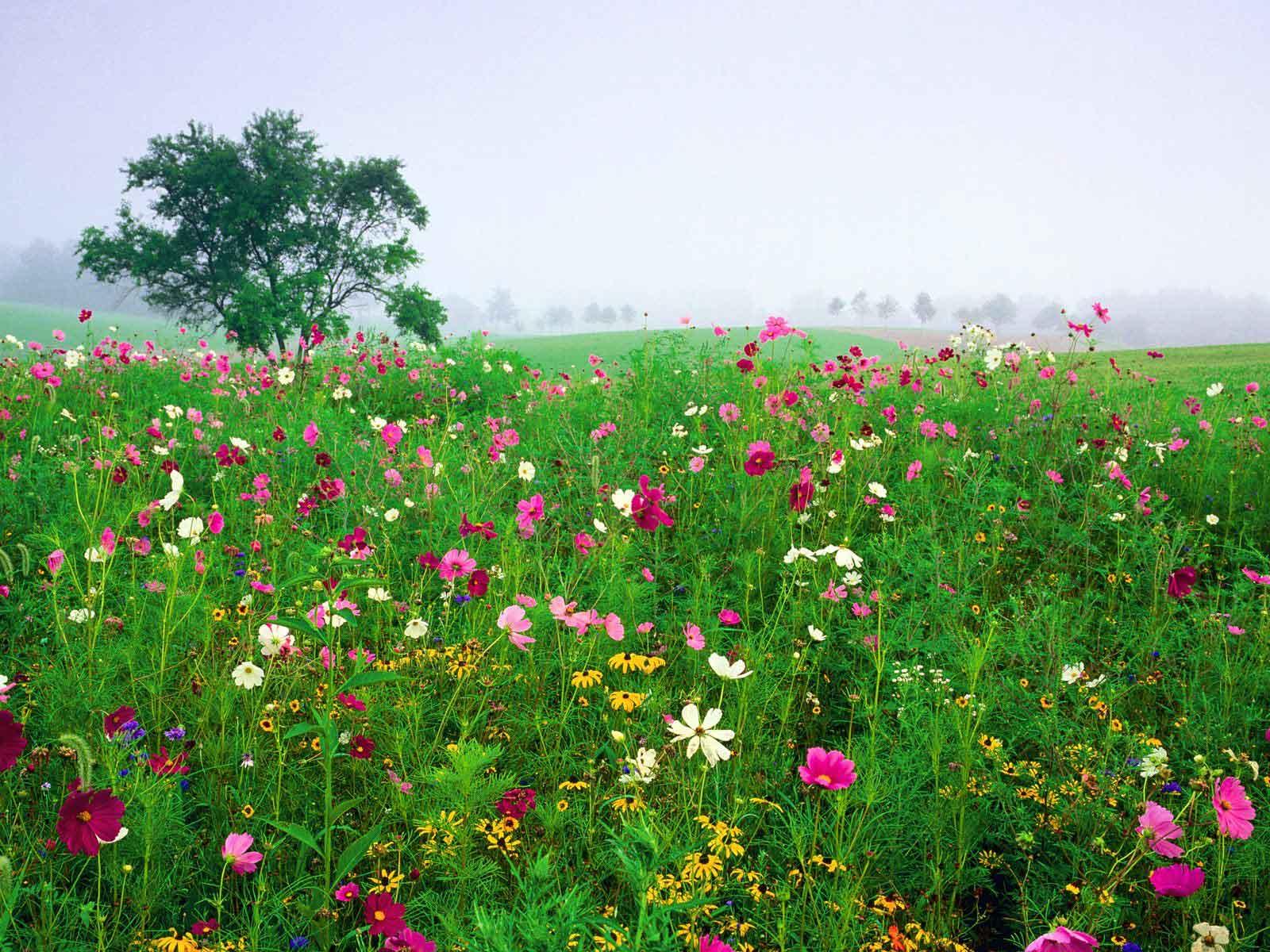 FLORES SILVESTRES SIGNIFICA LA LIBERTAD Y LA ALEGRÍA A MENUDO SON ...: unavidaenlosaromos.blogspot.com/2013/01/flores-silvestres.html