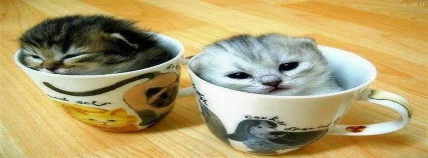 Facebook italia foto gatti divertenti per timeline for Immagini divertenti desktop
