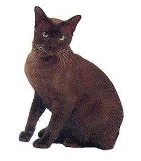 แมวทองแดงหรือศุภลักษณ์