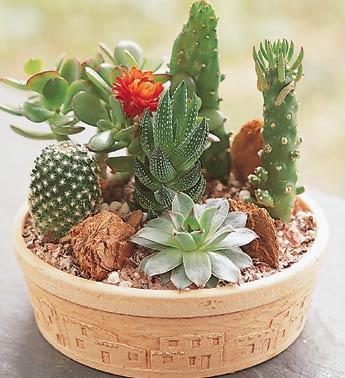Instituto lapidarium integrando e treinando vidas 029 - Composiciones de cactus ...