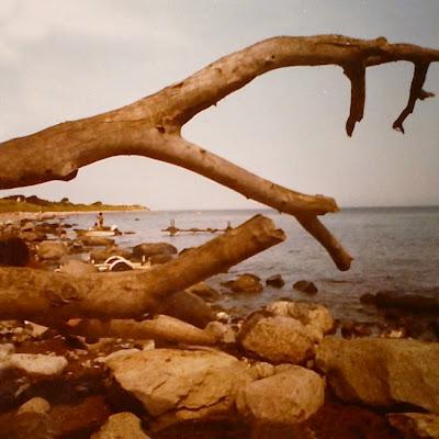 Steiniger Strand, Äste ragen ins Bild
