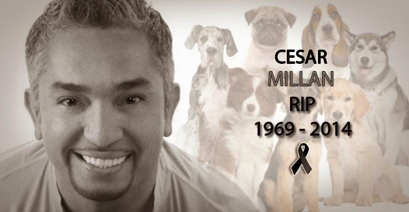 Cesar Millan 4