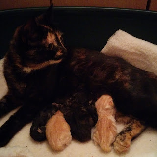 Peach and her Kittens