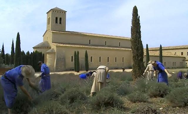 Monges beneditinos trabalham os campos no sul da França