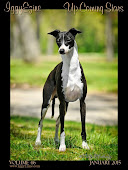 IggyEzine ~ Italian Greyhound