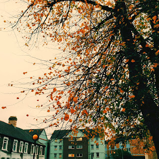autumn leaves yellow leaves tree cardiff cardiff student union autumn leaves drop
