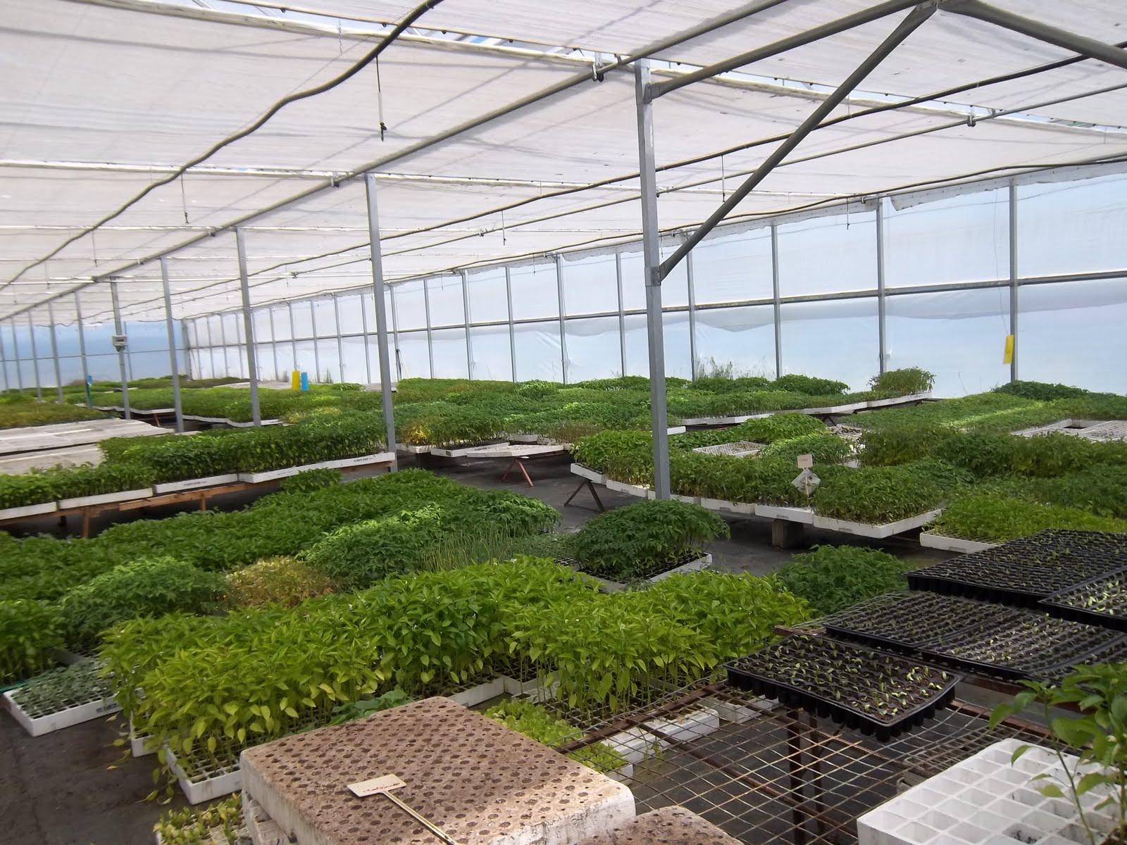 Viveros forestales y de hortalizas nuestros invernaderos for Vivero e invernadero