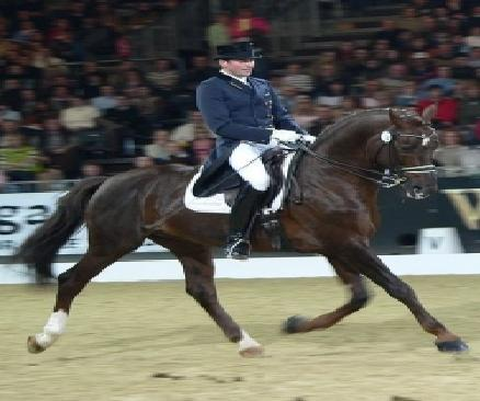 Most modern concepts of dressage saddle on the degree of athleticism