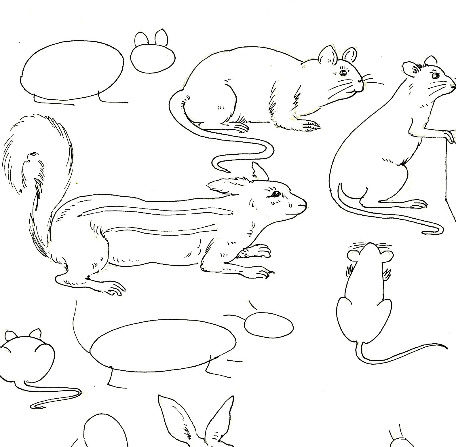 Out Line Drawing Of Animals : Studentsdrawing animal outline drawing